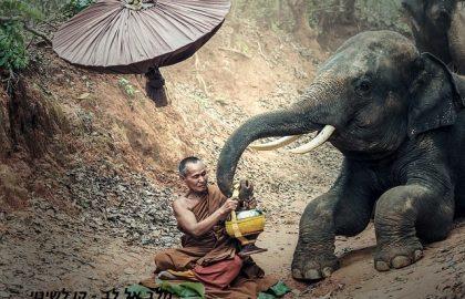 למה הפיל עושה כל מה שהמאלף אומר לו ? – NLP ודמיון מודרך – שינוי הרגלים, דפוסים ואוטומטים